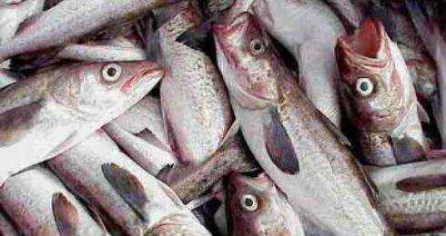La mitad del pescado que comemos viene de criaderos for Criadero de pescado