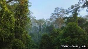 Las selvas densas son muy difíciles de estudiar por los científicos.