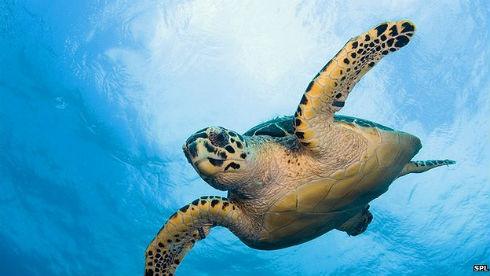 cites_sea_turtle_