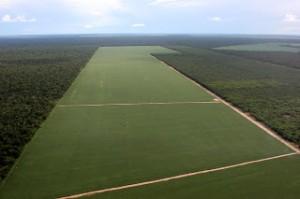 Siembra de soja en el Amazonas