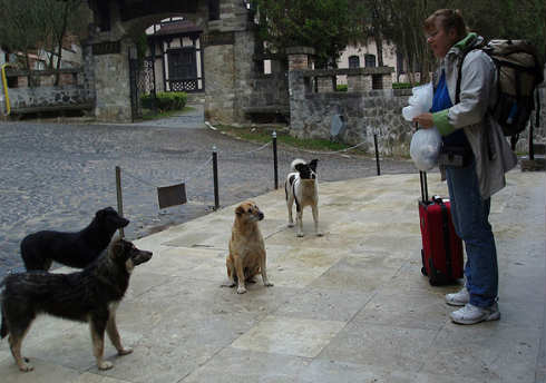 perros-bucarest