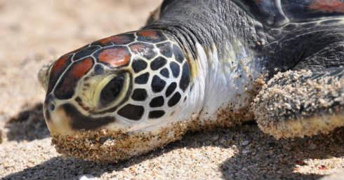 Activista-asesinado-en-Costa-Rica-por-denunciar-robos-de-huevos-de-tortuga