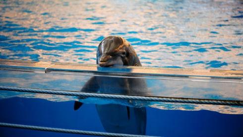 India-prohíbe-los-espectáculos-con-delfines