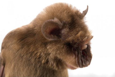 chewbacca-bat-960x623
