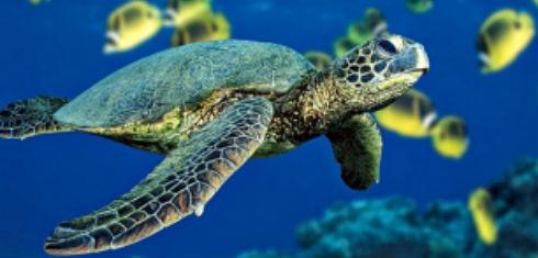 _tortugasas