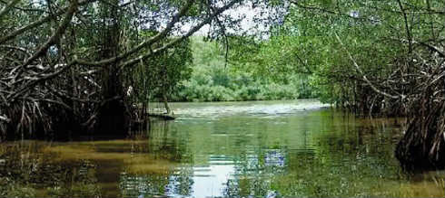 manglares4