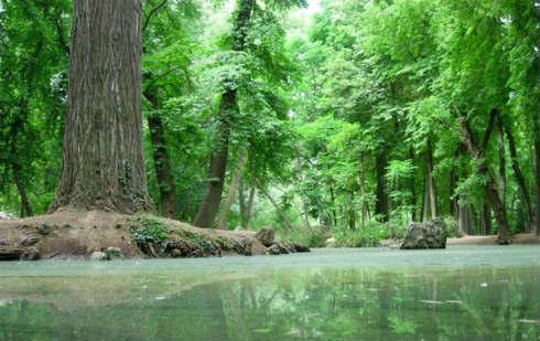 bosques-en-peligro1