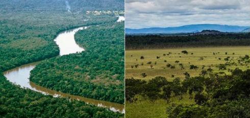 nota-1073809-sudamerica-region-perdio-mayor-superficie-bosques-mundo-140330093308