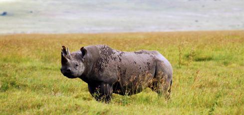 rinoceronte-960x623