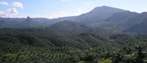 Un-ambicioso-plan-para-acabar-con-la-deforestación