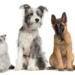 elegir-mascotas