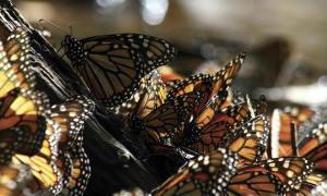 Reserva-Biosfera-Mariposa-Monarca-01-320x210