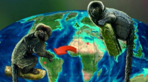 306_IEOD_Dos-fosiles-hallados-en-Peru-y-Libia-hermanan-a-los-monos-de-Sudamerica-y-Africa_image_380