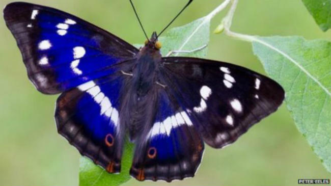 butterfly_one_624x351_petereeles