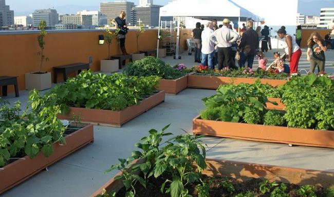 jardines en azoteas podr an ayudar a combatir la contaminaci n