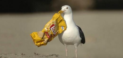El-90-de-aves-marinas-del-mundo-ha-tragado-y-acumula-residuos-de-plastico