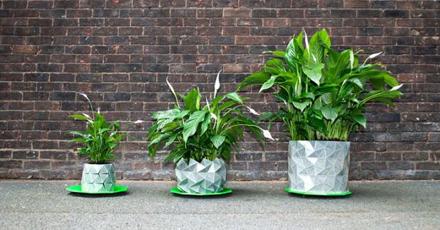 macetas que crecen con las plantas 4