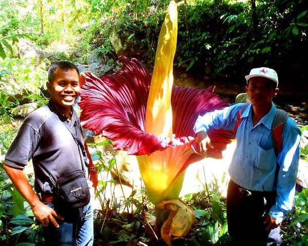 plantas-mas-raras-600x480