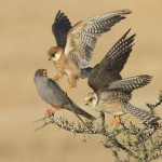 Amir-Ben-Dov_-Birds