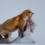 Don-Gutoski_-Wildlife-Photographer-of-the-Year