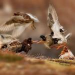 Ondrej-Pelánek_-Young-Wildlife-Photographer-of-the-Year