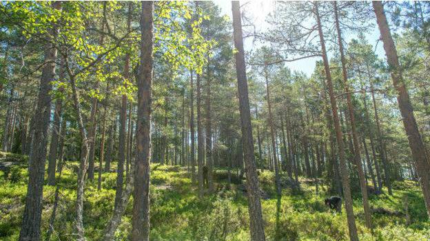 La completa evaluación de los bosques es lo que permite a Noruega actuar y protegerlos. Imagen: Michael Becker
