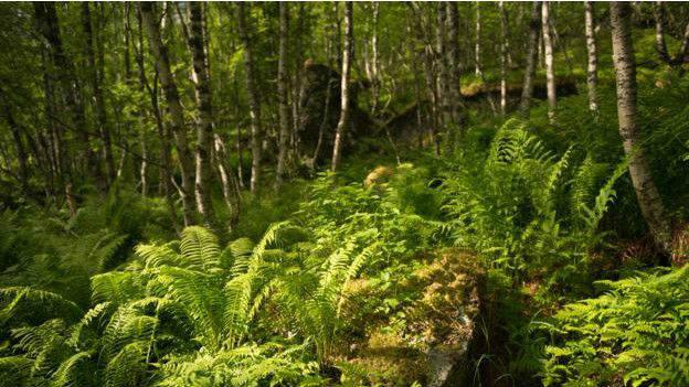 No sólo se inspeccionan los árboles: la madera muerta en el suelo es hábitat de muchas especies. Imagen: Image copyrightMichael Becker