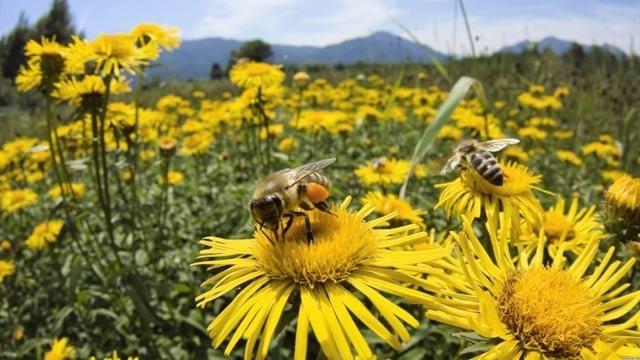 abejas-flor-e1440649754198