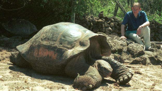 Las tortugas gigantes son una de las principales atracciones de las Islas Galápagos.