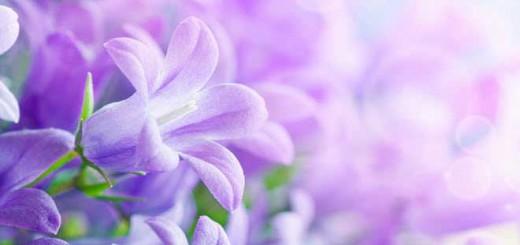 flores-hermosas-mundo