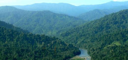 Bosques-Venezolanos