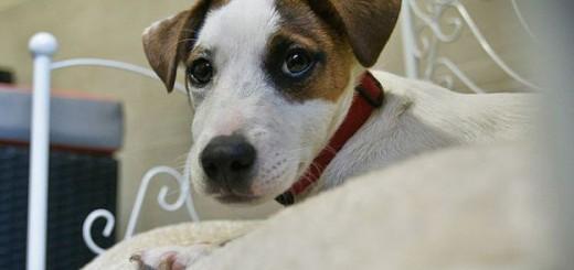 Los perros reconocen palabras concretas y la entonación, según expertos. Imagen: Getty
