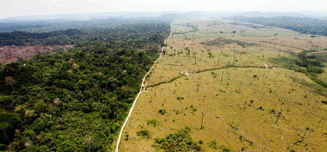 responsabilizanagronegociodeforestacion