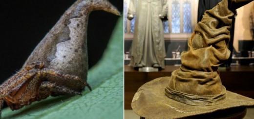 Adiós Aragog, hola Eriovixia Gryffindori