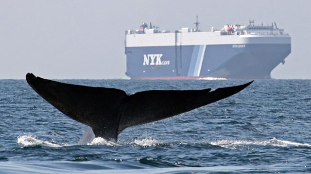 blue-whales-ships-960x623