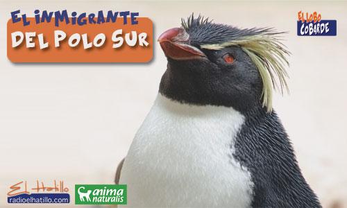 24-El-Inmigrante-del-Polo-S