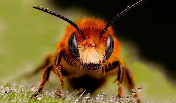 abejas-la-especie-ms-importante-del-mundo-curiosidades