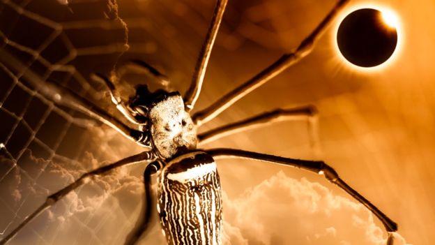 Un estudio de 1991 observó que un tipo de araña comenzó a desarmar su red cuando comenzó el eclipse y volvió a rearmarla cuando terminó. Imagen GETTY IMAGES